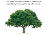 Projeto Floresta Comum